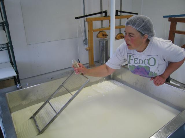 Cutting the curds.  Curd is cut horizontally.