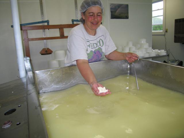 Curds and whey - When first cut, the curds are very soft... they get firmer during cooking.