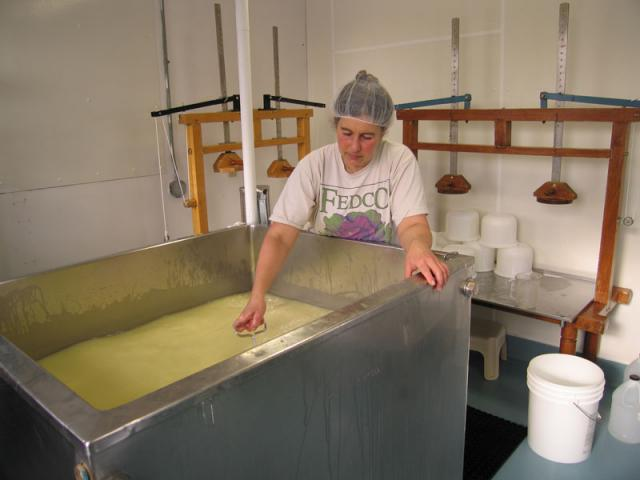 Cooking the curds - the curds are constantly stirred while the temp is slowly raised.