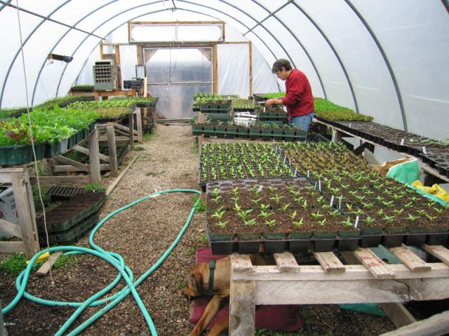 All of our garden plants are started in the greenhouse in early March